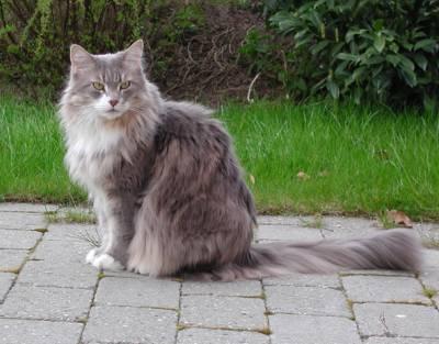 Image of Løve Hulen's Tabita