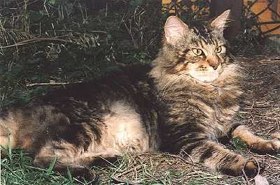 Image of Coonskin Khamsin Brubeck of The Unicat
