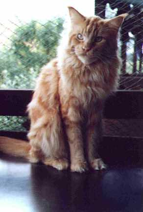 Image of Macavity Calypso