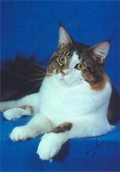 Image of Nascat R/R Phantom of Coonoquan