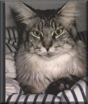 Image of Tara Alaska Boy