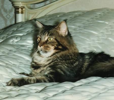 Image of Walmet Stroker of Capecoon